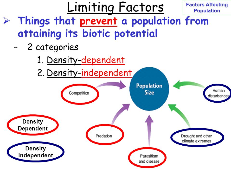 Limiting Factors  Things that prevent a population from attaining its biotic potential –2 categories 1.Density-dependent 2.Density-independent Densit