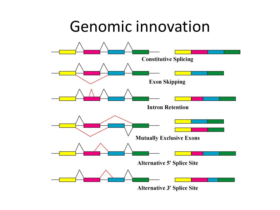 Genomic innovation