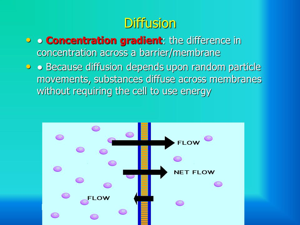 Diffusion ● Concentration gradient: the difference in concentration across a barrier/membrane ● Concentration gradient: the difference in concentration across a barrier/membrane ● Because diffusion depends upon random particle movements, substances diffuse across membranes without requiring the cell to use energy ● Because diffusion depends upon random particle movements, substances diffuse across membranes without requiring the cell to use energy