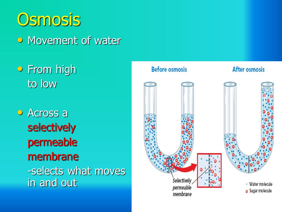 Osmosis Movement of water Movement of water From high From high to low Across a Across aselectivelypermeablemembrane -selects what moves in and out