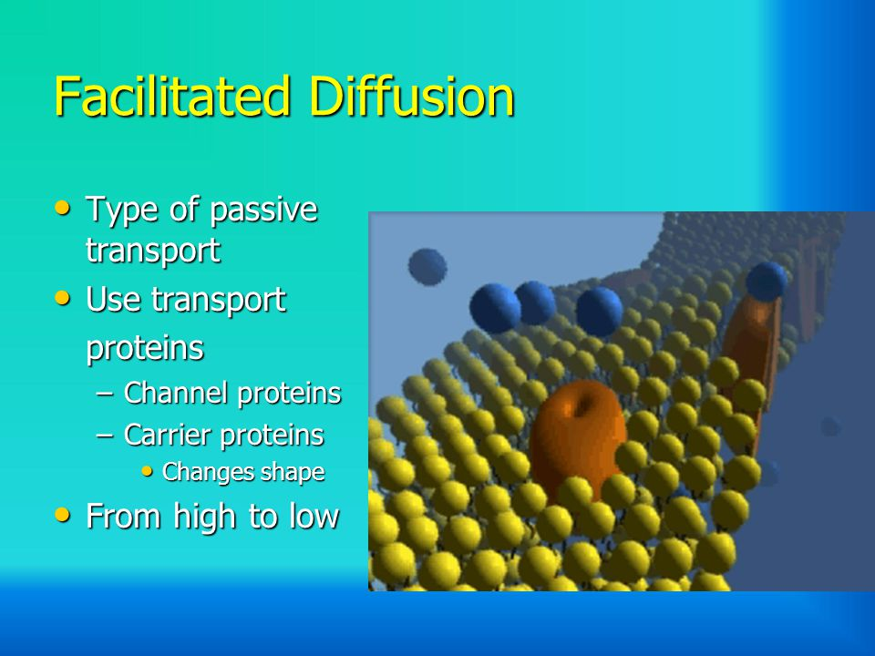 Facilitated Diffusion Type of passive transport Type of passive transport Use transport Use transportproteins –Channel proteins –Carrier proteins Changes shape Changes shape From high to low From high to low