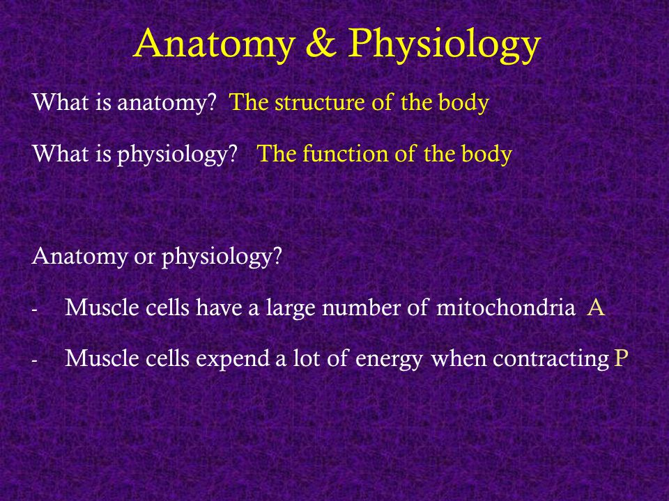 Anatomy & Physiology What is anatomy? The structure of the body What is physiology? The function of the body Anatomy or physiology? - Muscle cells hav