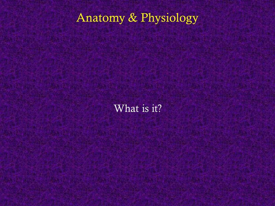 Anatomy & Physiology Anatomy - the study of the structure of the body Physiology – the study of the function of the body Anatomy of the nephron Physiology of the nephron