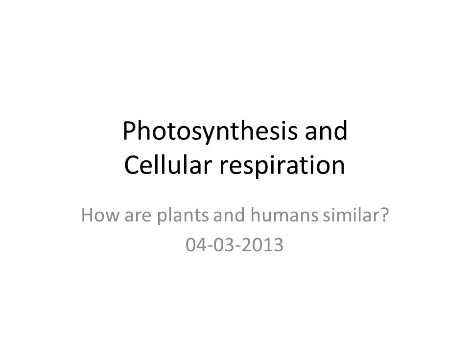 Photosynthesis and Cellular respiration How are plants and humans similar 04-03-2013