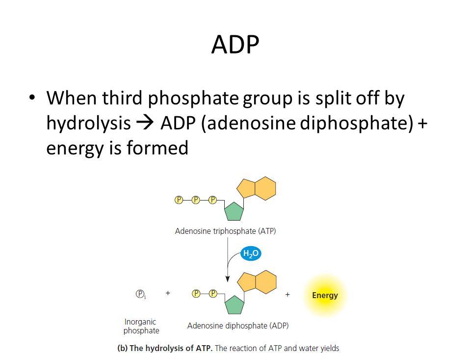 ADP When third phosphate group is split off by hydrolysis  ADP (adenosine diphosphate) + energy is formed