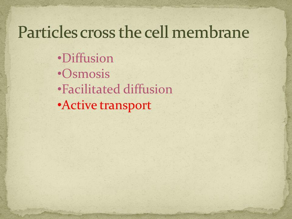 Diffusion Osmosis Facilitated diffusion Active transport