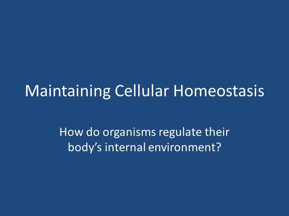 Maintaining Cellular Homeostasis How do organisms regulate their body's internal environment