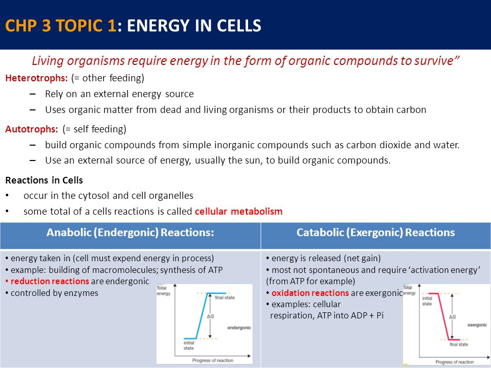CHP 3 TOPIC 1: ENERGY IN CELLS Living organisms require energy in the form of organic compounds to survive Heterotrophs: (= other feeding) – Rely on an external energy source – Uses organic matter from dead and living organisms or their products to obtain carbon Autotrophs: (= self feeding) – build organic compounds from simple inorganic compounds such as carbon dioxide and water.