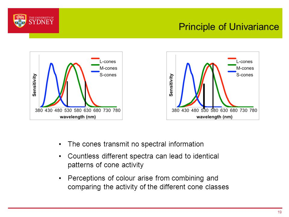 Principle of Univariance 19 The cones transmit no spectral information Countless different spectra can lead to identical patterns of cone activity Per