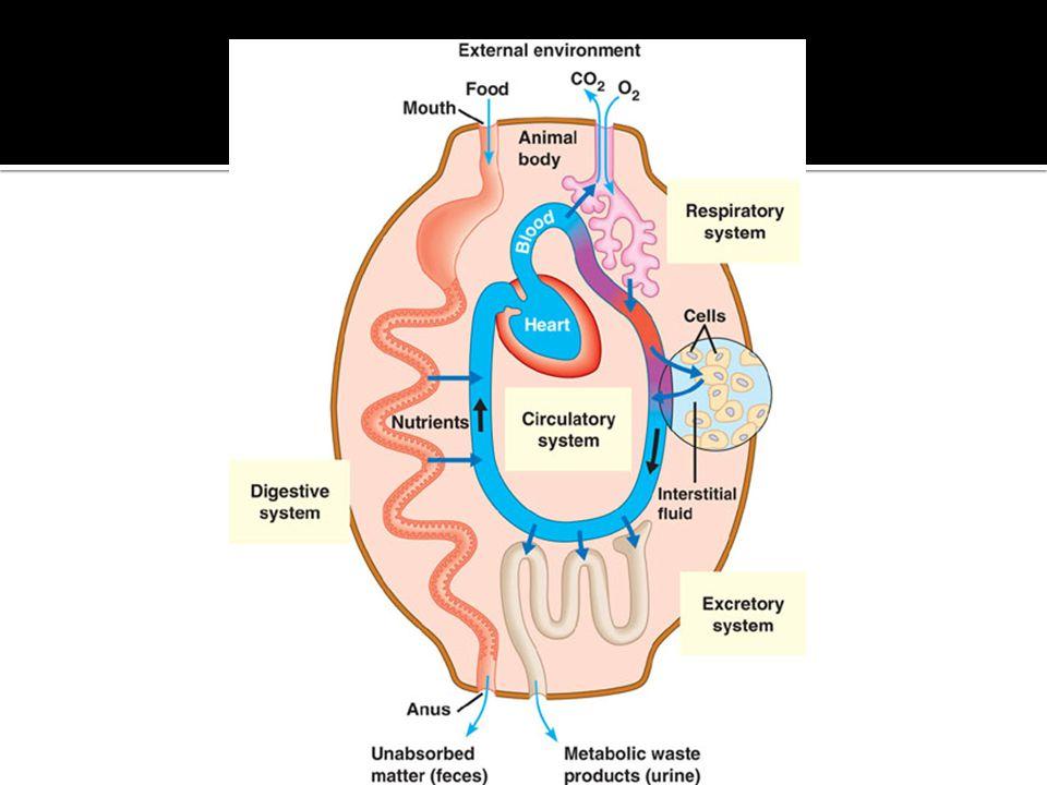 2008-2009 gills alveoli elephant seals Gas Exchange Respiratory Systems