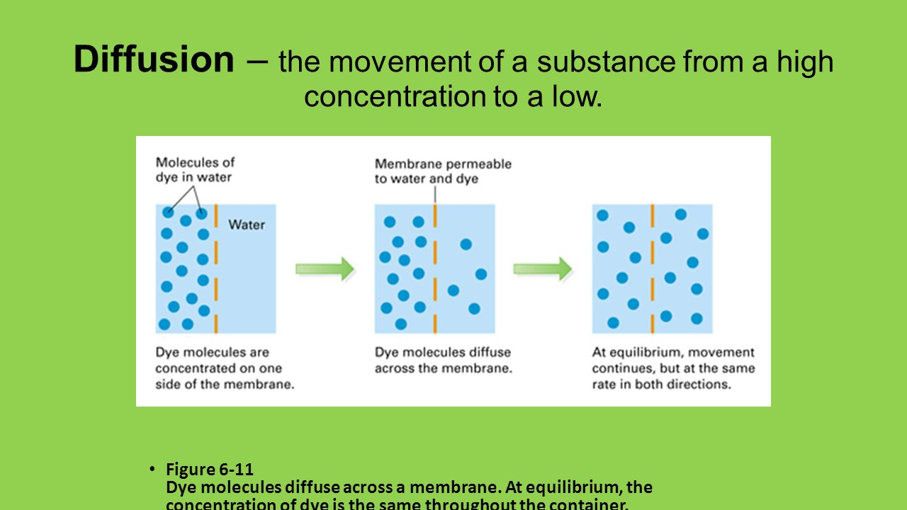 Diffusion – the movement of a substance from a high concentration to a low.