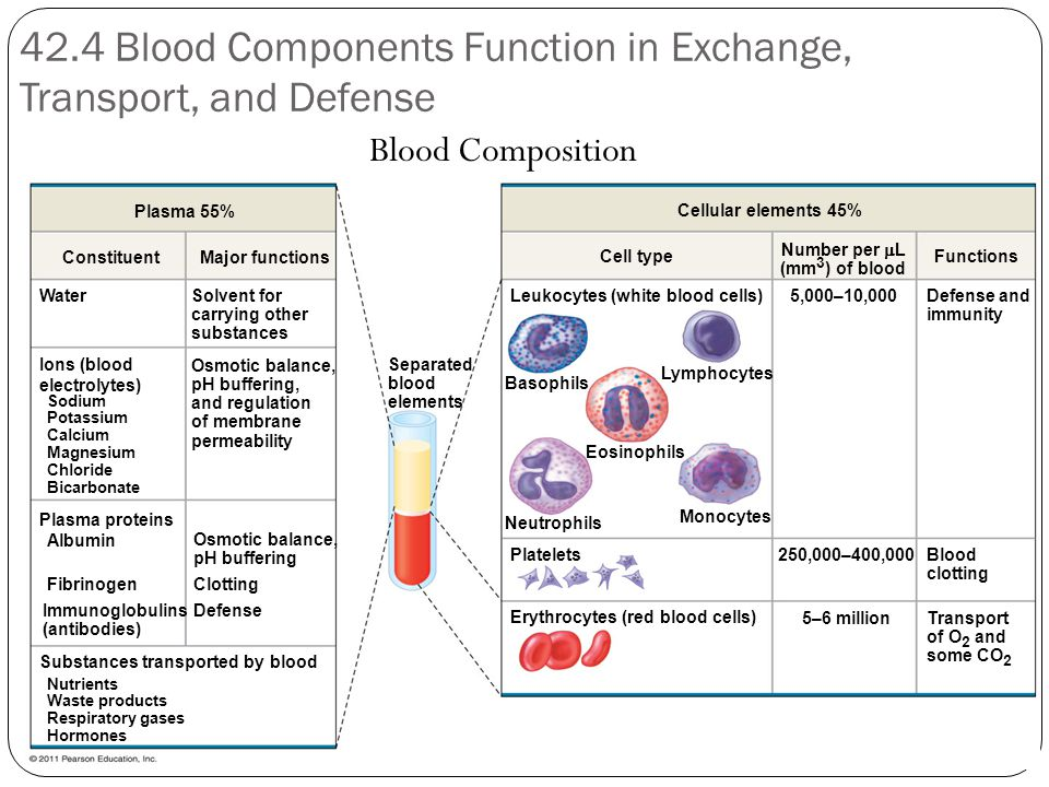 42.4 Blood Components Function in Exchange, Transport, and Defense Blood Composition Plasma 55% ConstituentMajor functions Water Ions (blood electrolytes) Sodium Potassium Calcium Magnesium Chloride Bicarbonate Solvent for carrying other substances Osmotic balance, pH buffering, and regulation of membrane permeability Plasma proteins Osmotic balance, pH buffering Albumin Fibrinogen Immunoglobulins (antibodies) Clotting Defense Substances transported by blood Nutrients Waste products Respiratory gases Hormones Separated blood elements Basophils Neutrophils Monocytes Lymphocytes Eosinophils Platelets Erythrocytes (red blood cells) 5–6 million 250,000–400,000Blood clotting Transport of O 2 and some CO 2 Defense and immunity Functions Number per  L (mm 3 ) of blood Cell type Cellular elements 45% Leukocytes (white blood cells)5,000–10,000