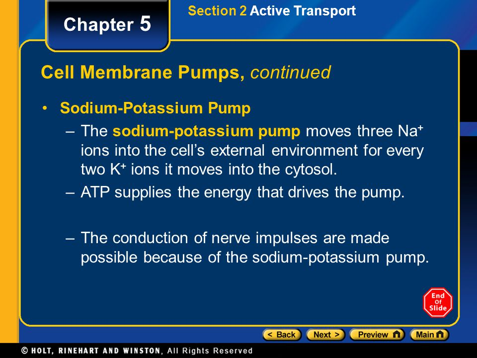 Section 2 Active Transport Chapter 5 Cell Membrane Pumps, continued Sodium-Potassium Pump –The sodium-potassium pump moves three Na + ions into the cell's external environment for every two K + ions it moves into the cytosol.