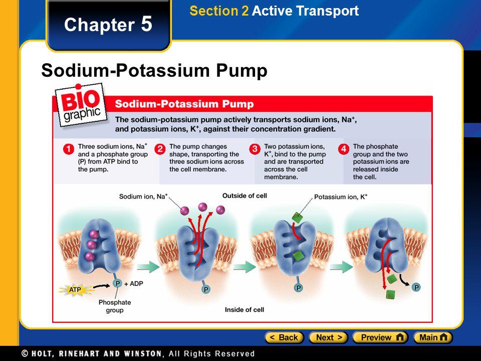 Chapter 5 Sodium-Potassium Pump Section 2 Active Transport