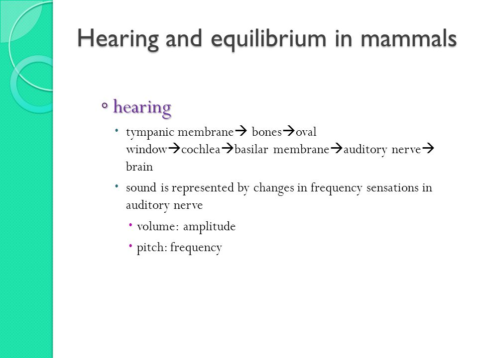 Hearing and equilibrium in mammals ◦ hearing  tympanic membrane  bones  oval window  cochlea  basilar membrane  auditory nerve  brain  sound is represented by changes in frequency sensations in auditory nerve  volume: amplitude  pitch: frequency