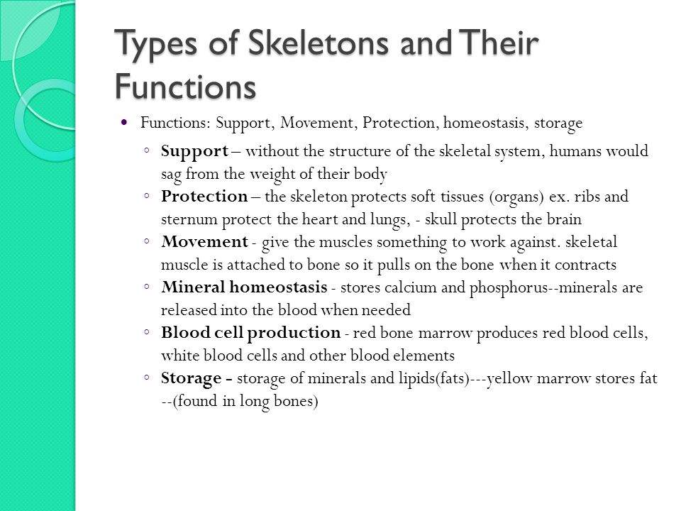 Types of Skeletons and Their Functions Functions: Support, Movement, Protection, homeostasis, storage ◦ Support – without the structure of the skeletal system, humans would sag from the weight of their body ◦ Protection – the skeleton protects soft tissues (organs) ex.