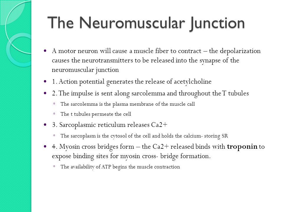 The Neuromuscular Junction A motor neuron will cause a muscle fiber to contract – the depolarization causes the neurotransmitters to be released into the synapse of the neuromuscular junction 1.