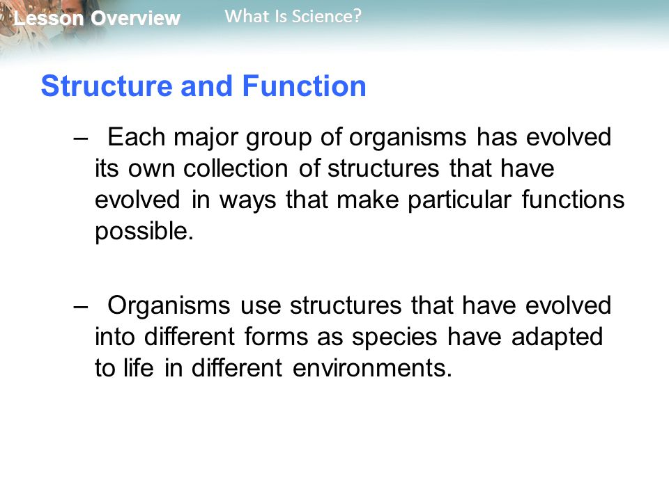 Lesson Overview Lesson Overview What Is Science? Structure and Function –Each major group of organisms has evolved its own collection of structures th