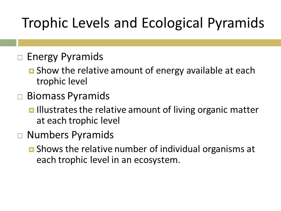 Trophic Levels and Ecological Pyramids  Energy Pyramids  Show the relative amount of energy available at each trophic level  Biomass Pyramids  Ill