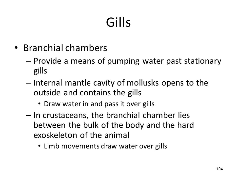 Gills Branchial chambers – Provide a means of pumping water past stationary gills – Internal mantle cavity of mollusks opens to the outside and contains the gills Draw water in and pass it over gills – In crustaceans, the branchial chamber lies between the bulk of the body and the hard exoskeleton of the animal Limb movements draw water over gills 104