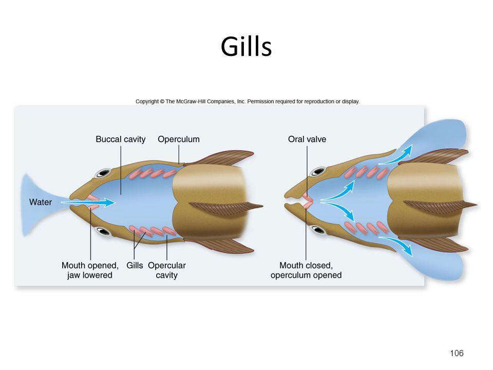 106 Gills