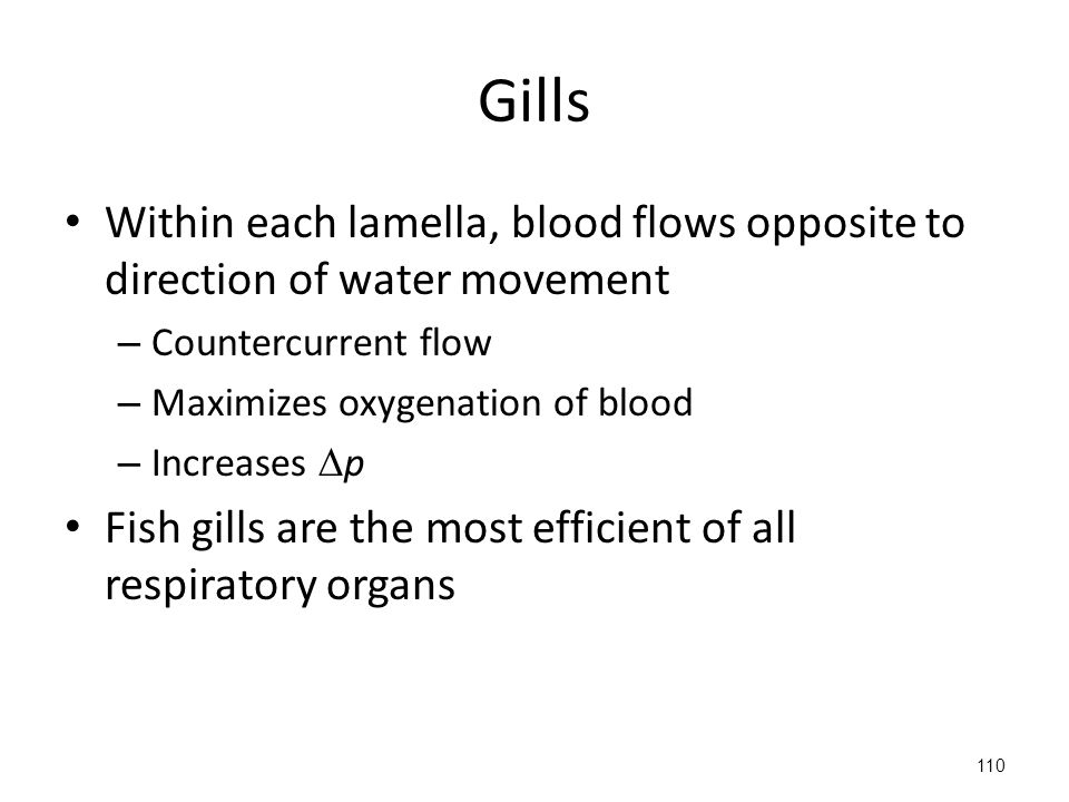 Gills Within each lamella, blood flows opposite to direction of water movement – Countercurrent flow – Maximizes oxygenation of blood – Increases  p Fish gills are the most efficient of all respiratory organs 110
