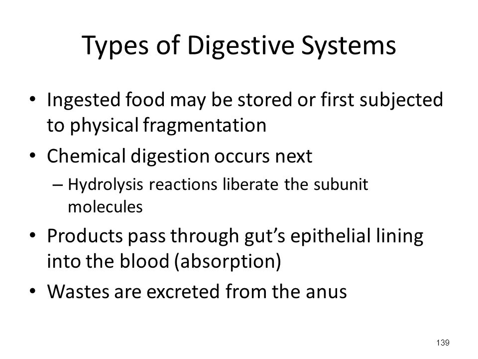 Ingested food may be stored or first subjected to physical fragmentation Chemical digestion occurs next – Hydrolysis reactions liberate the subunit molecules Products pass through gut's epithelial lining into the blood (absorption) Wastes are excreted from the anus 139