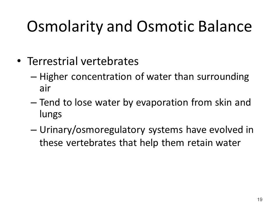 Osmolarity and Osmotic Balance Terrestrial vertebrates – Higher concentration of water than surrounding air – Tend to lose water by evaporation from skin and lungs – Urinary/osmoregulatory systems have evolved in these vertebrates that help them retain water 19