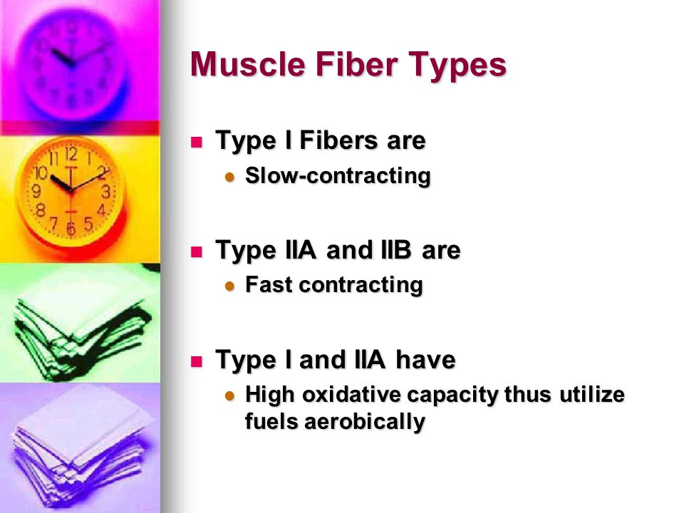Muscle Fiber Types Type I Fibers are Type I Fibers are Slow-contracting Slow-contracting Type IIA and IIB are Type IIA and IIB are Fast contracting Fa
