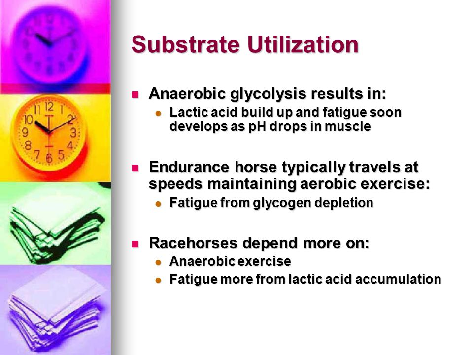 Substrate Utilization Anaerobic glycolysis results in: Anaerobic glycolysis results in: Lactic acid build up and fatigue soon develops as pH drops in muscle Lactic acid build up and fatigue soon develops as pH drops in muscle Endurance horse typically travels at speeds maintaining aerobic exercise: Endurance horse typically travels at speeds maintaining aerobic exercise: Fatigue from glycogen depletion Fatigue from glycogen depletion Racehorses depend more on: Racehorses depend more on: Anaerobic exercise Anaerobic exercise Fatigue more from lactic acid accumulation Fatigue more from lactic acid accumulation
