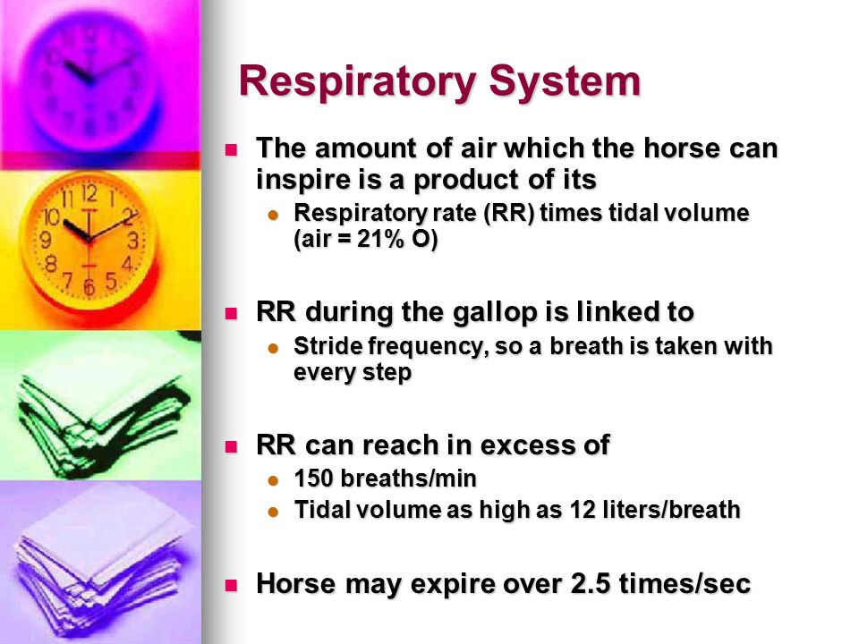Respiratory System The amount of air which the horse can inspire is a product of its The amount of air which the horse can inspire is a product of its Respiratory rate (RR) times tidal volume (air = 21% O) Respiratory rate (RR) times tidal volume (air = 21% O) RR during the gallop is linked to RR during the gallop is linked to Stride frequency, so a breath is taken with every step Stride frequency, so a breath is taken with every step RR can reach in excess of RR can reach in excess of 150 breaths/min 150 breaths/min Tidal volume as high as 12 liters/breath Tidal volume as high as 12 liters/breath Horse may expire over 2.5 times/sec Horse may expire over 2.5 times/sec