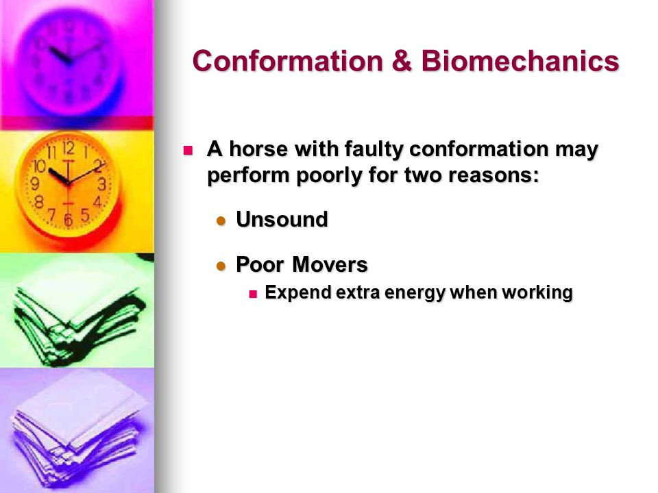Conformation & Biomechanics A horse with faulty conformation may perform poorly for two reasons: A horse with faulty conformation may perform poorly for two reasons: Unsound Unsound Poor Movers Poor Movers Expend extra energy when working Expend extra energy when working