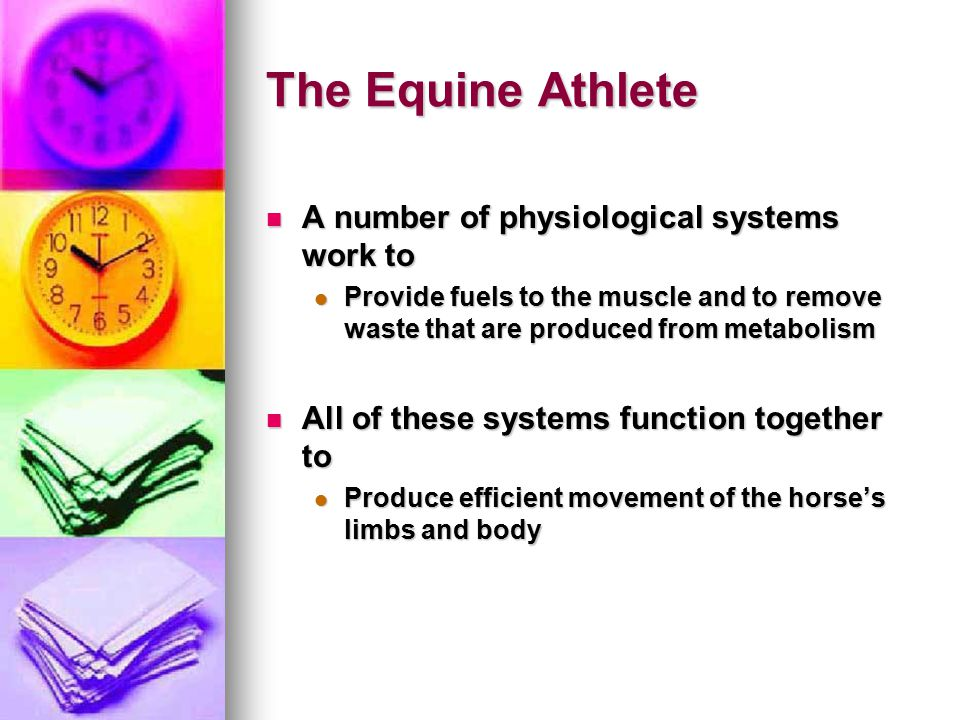 The Equine Athlete A number of physiological systems work to A number of physiological systems work to Provide fuels to the muscle and to remove waste that are produced from metabolism Provide fuels to the muscle and to remove waste that are produced from metabolism All of these systems function together to All of these systems function together to Produce efficient movement of the horse's limbs and body Produce efficient movement of the horse's limbs and body