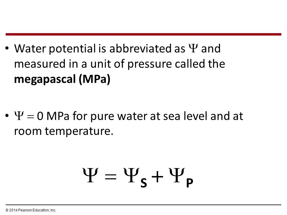 Water potential is abbreviated as  and measured in a unit of pressure called the megapascal (MPa)   0 MPa for pure water at sea level and at room t
