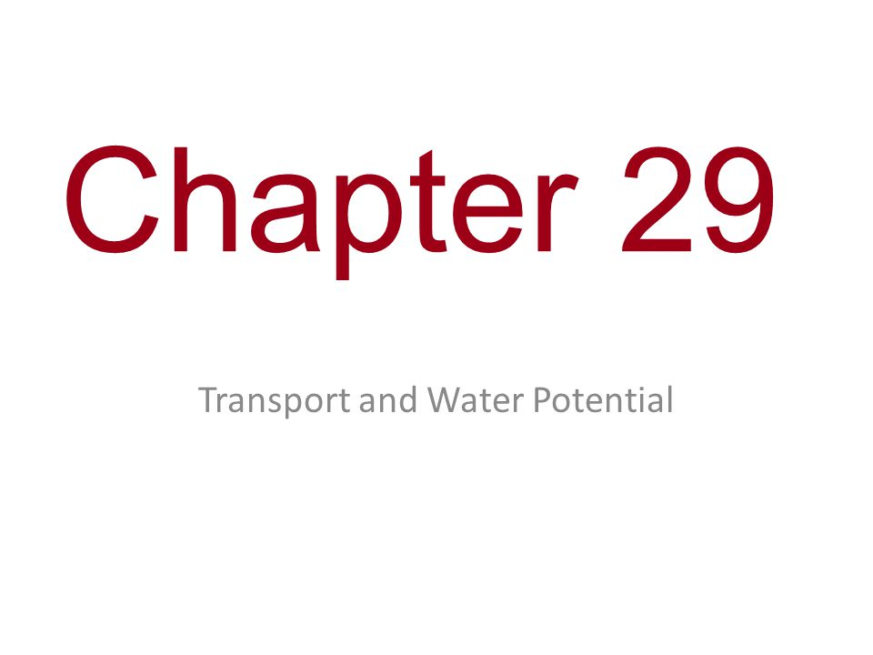 Chapter 29 Transport and Water Potential