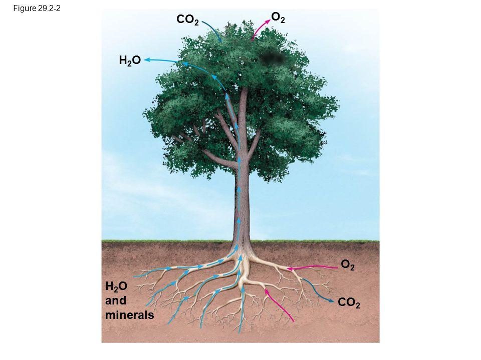 Figure 29.2-2 H 2 O and minerals H2OH2O O2O2 CO 2 O2O2