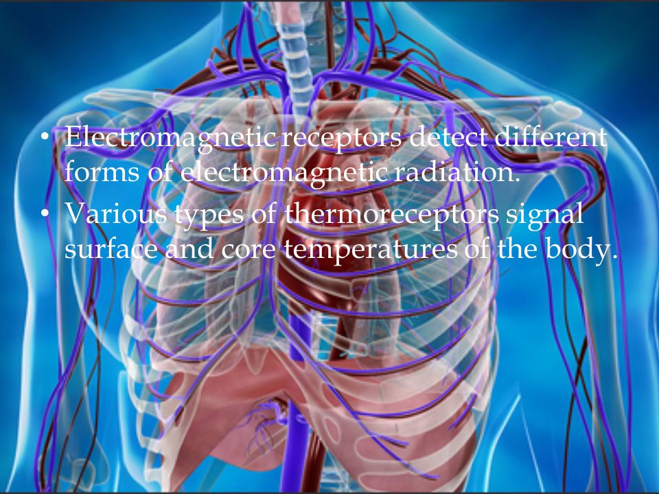 Electromagnetic receptors detect different forms of electromagnetic radiation. Various types of thermoreceptors signal surface and core temperatures o