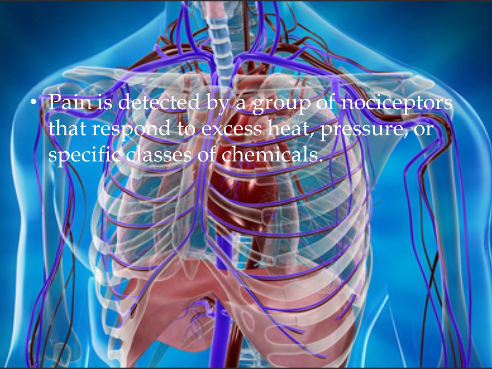 Pain is detected by a group of nociceptors that respond to excess heat, pressure, or specific classes of chemicals.