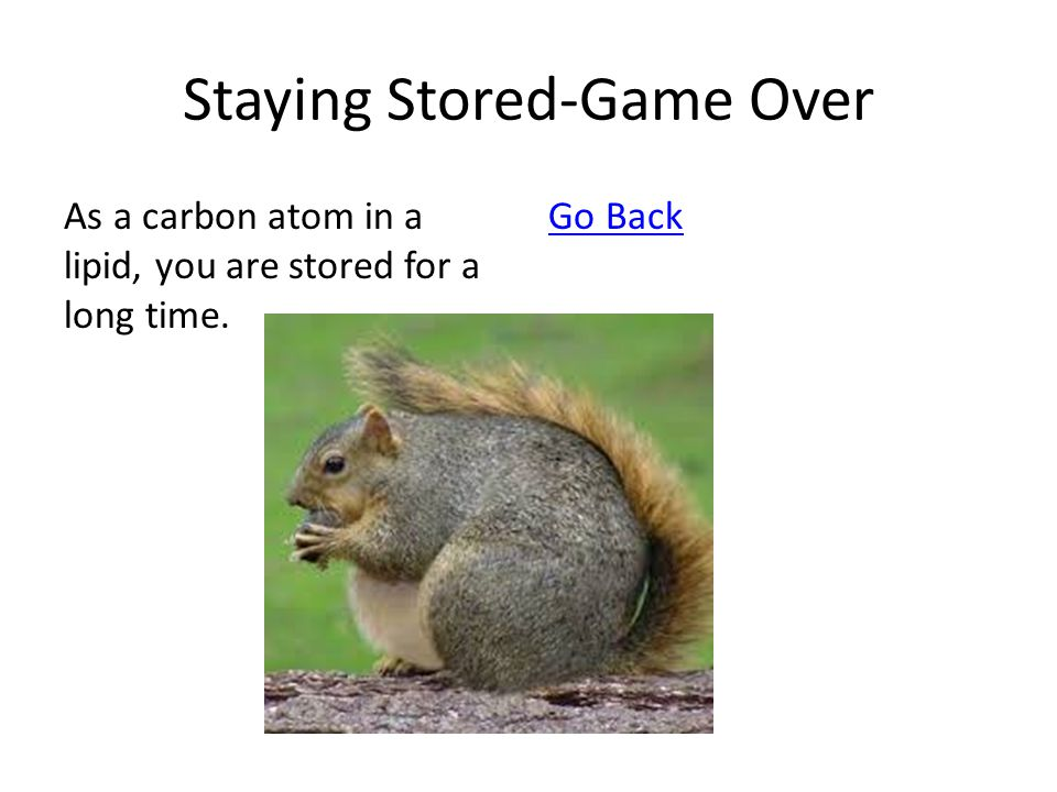 Staying Stored-Game Over As a carbon atom in a lipid, you are stored for a long time. Go Back