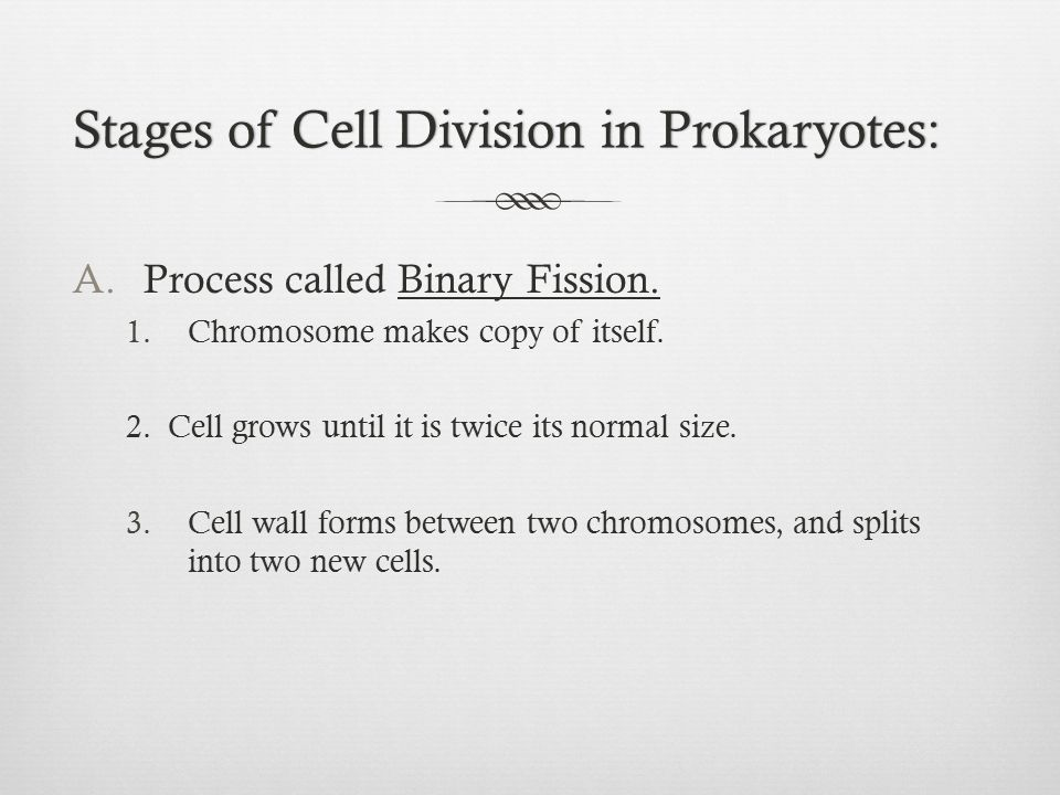 Stages of Cell Division in Prokaryotes:Stages of Cell Division in Prokaryotes: A.Process called Binary Fission. 1.Chromosome makes copy of itself. 2.