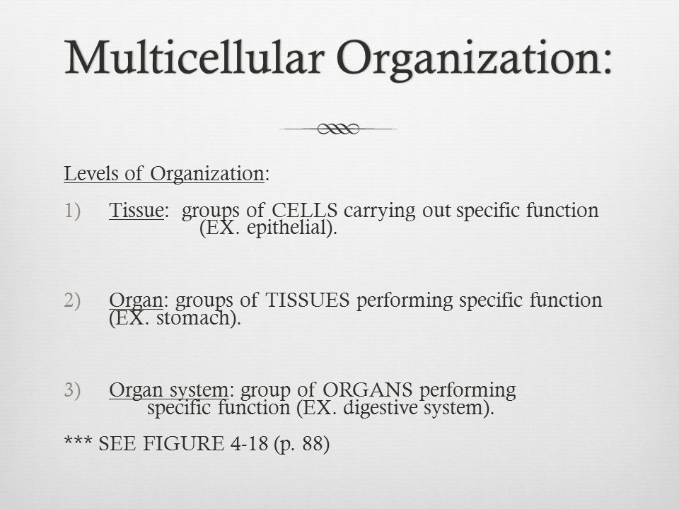 Multicellular Organization:Multicellular Organization: Levels of Organization: 1)Tissue: groups of CELLS carrying out specific function (EX. epithelia