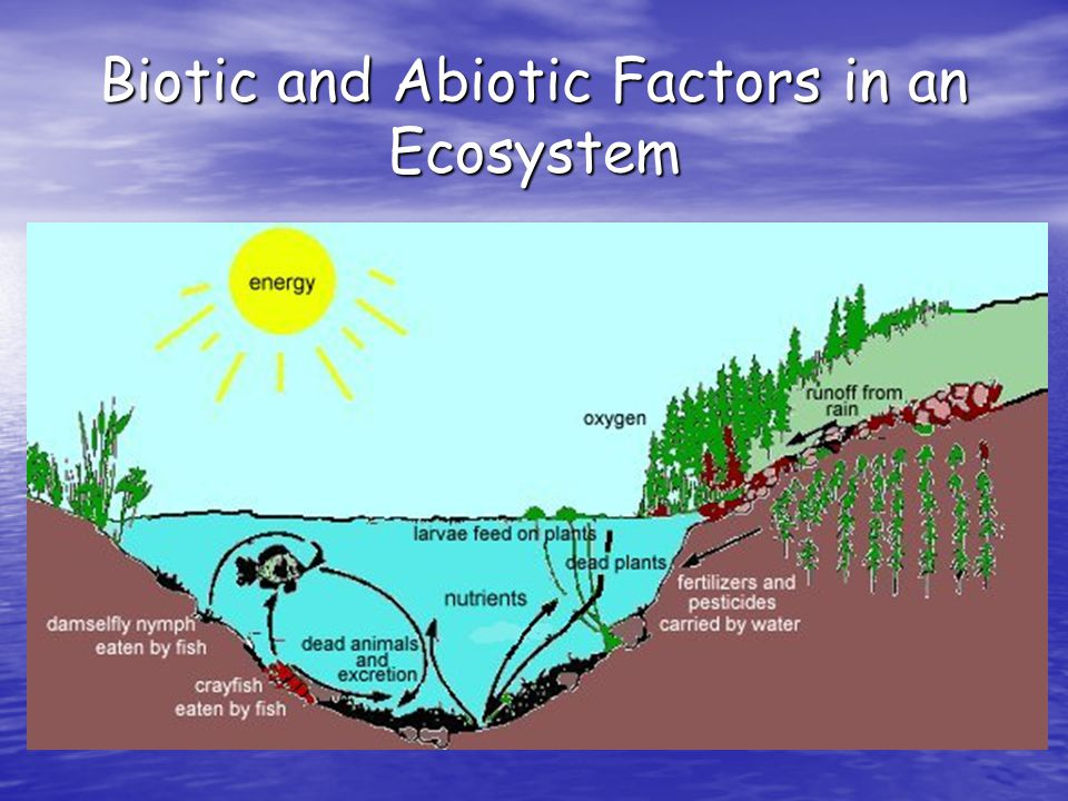 Ecosystems: The Basics Cont.The first step in a biotic community is the species present.