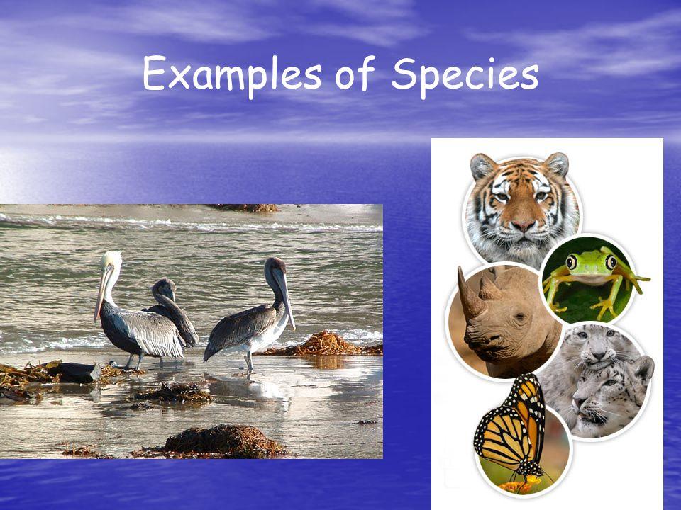 Examples of Species