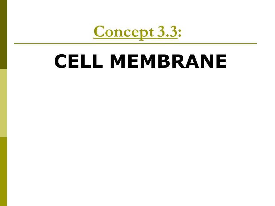 Concept 3.3: CELL MEMBRANE