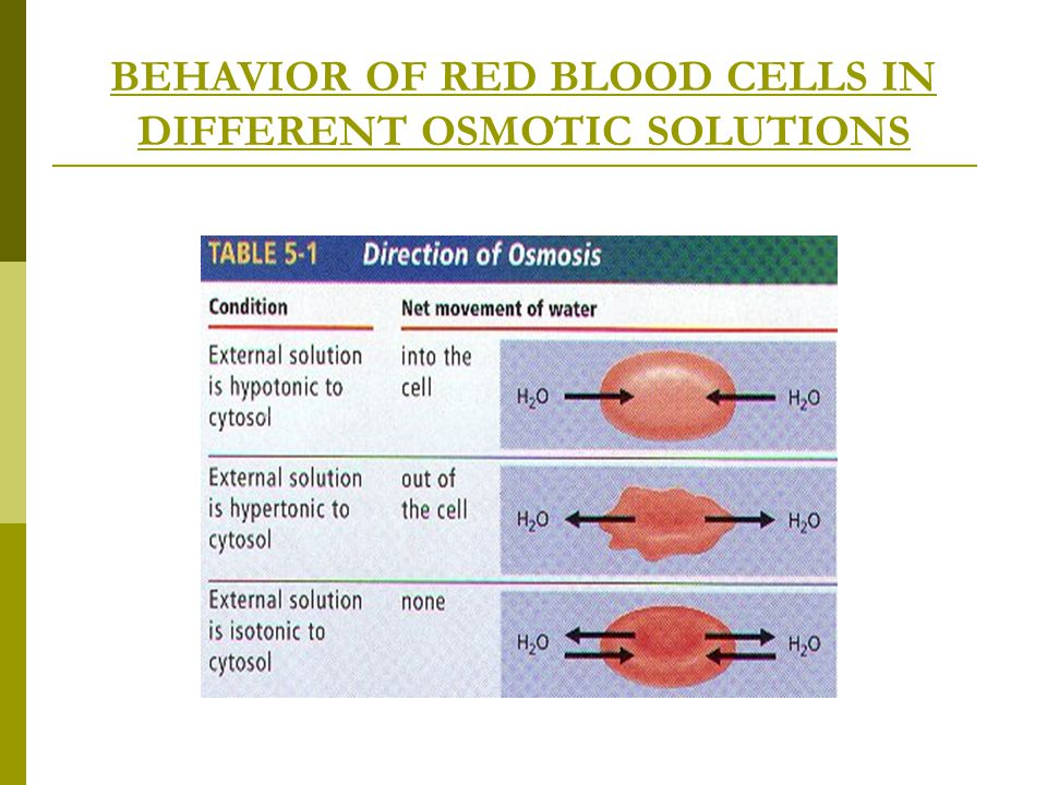 BEHAVIOR OF RED BLOOD CELLS IN DIFFERENT OSMOTIC SOLUTIONS