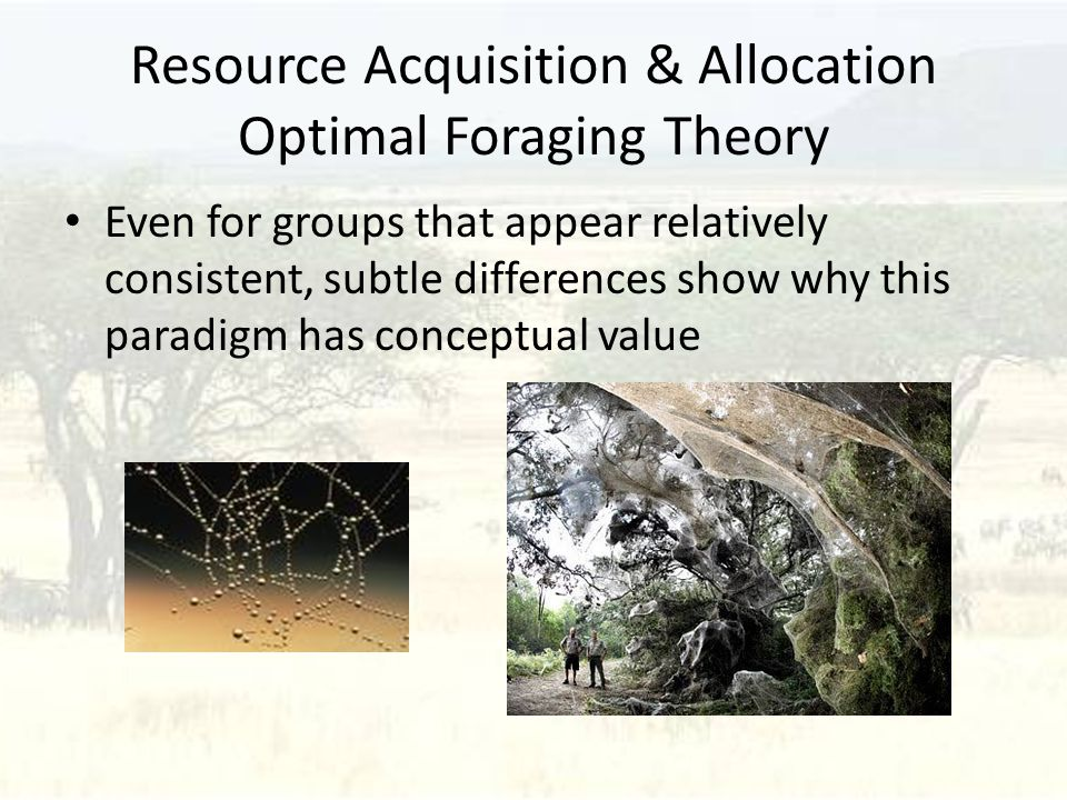Resource Acquisition & Allocation Optimal Foraging Theory Even for groups that appear relatively consistent, subtle differences show why this paradigm has conceptual value