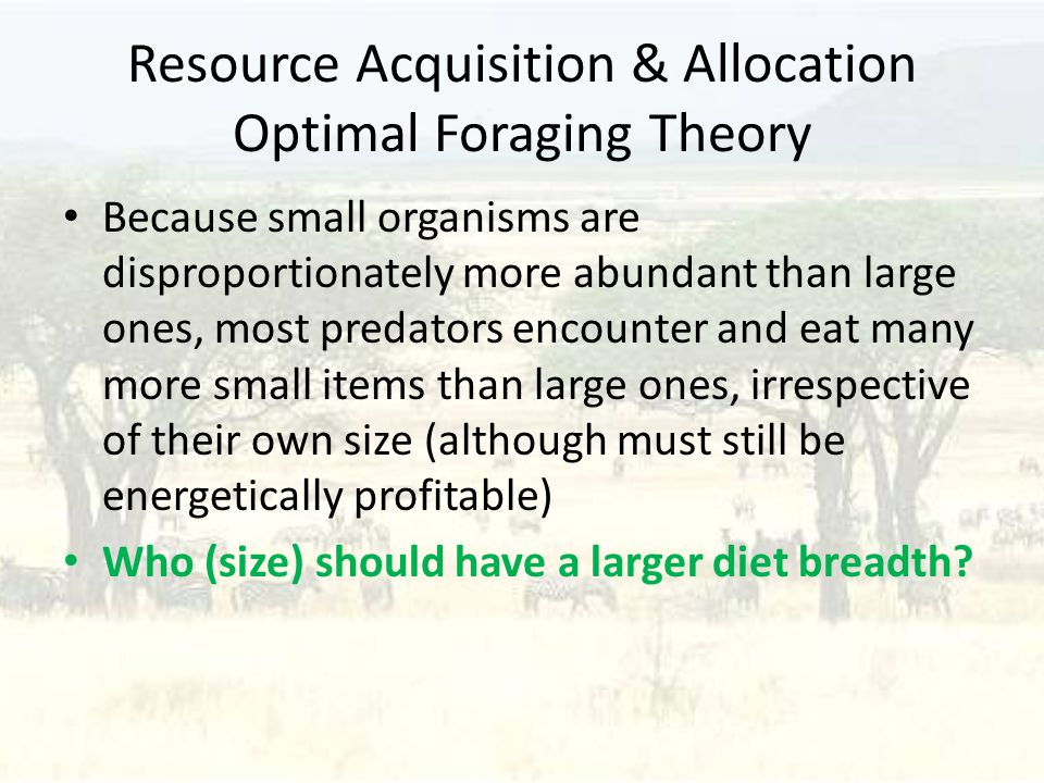 Resource Acquisition & Allocation Optimal Foraging Theory Because small organisms are disproportionately more abundant than large ones, most predators encounter and eat many more small items than large ones, irrespective of their own size (although must still be energetically profitable) Who (size) should have a larger diet breadth