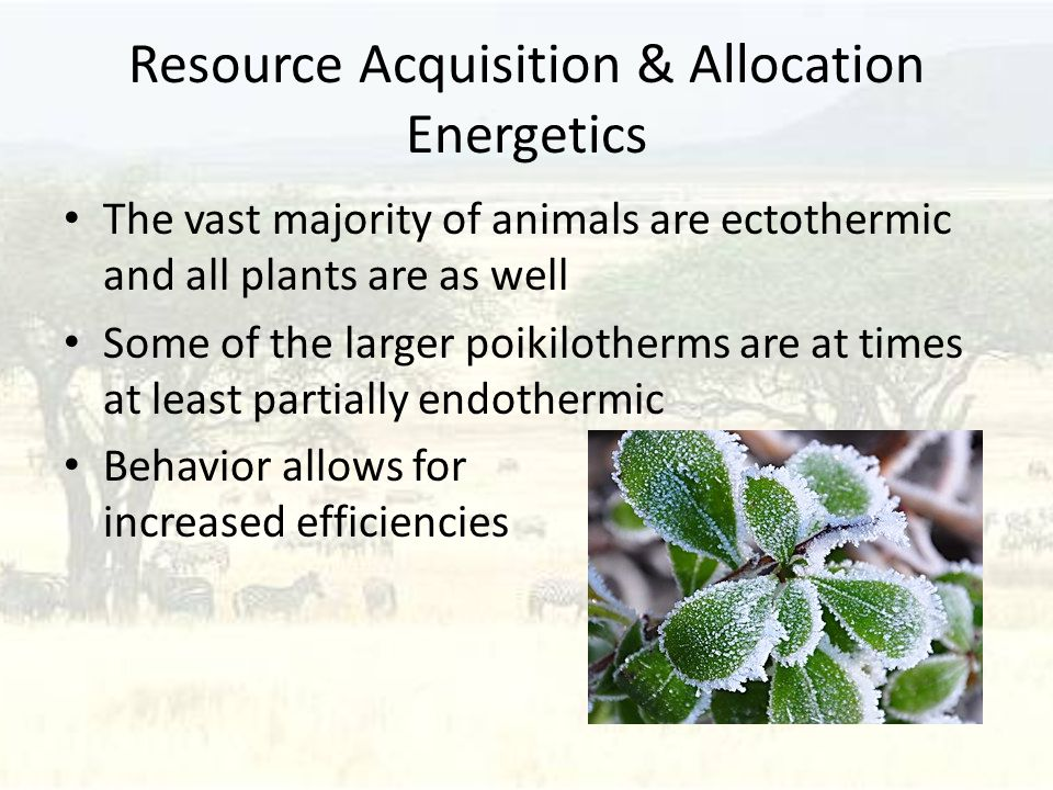 Resource Acquisition & Allocation Energetics The vast majority of animals are ectothermic and all plants are as well Some of the larger poikilotherms are at times at least partially endothermic Behavior allows for increased efficiencies