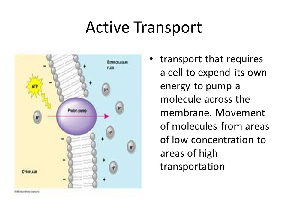 Active Transport transport that requires a cell to expend its own energy to pump a molecule across the membrane.