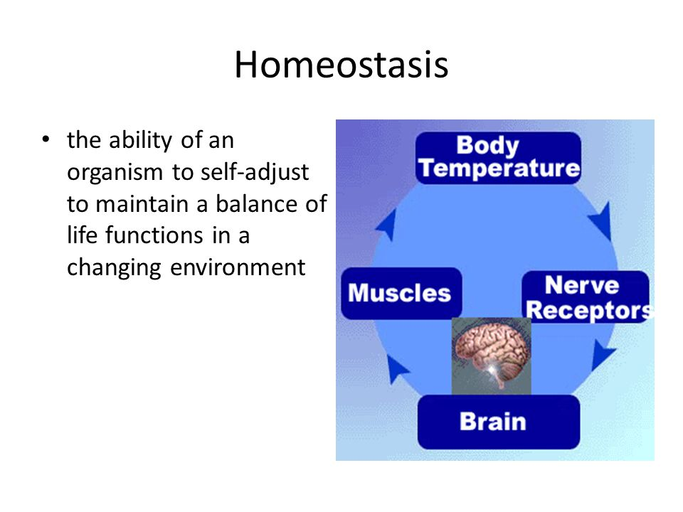 Homeostasis the ability of an organism to self-adjust to maintain a balance of life functions in a changing environment